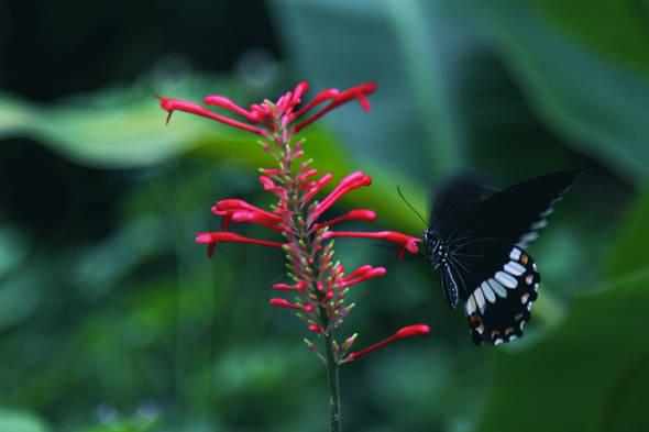 fleurpapillon