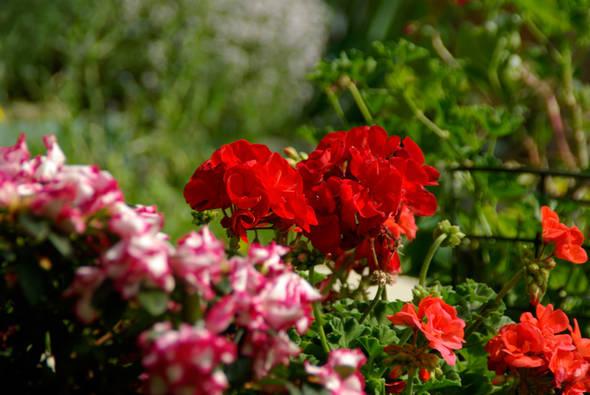 jardinsfleuris